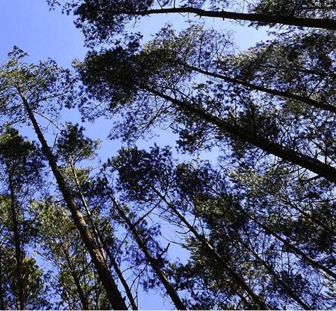 Scierie DUBOT & FILS - Unité de production de bois bruts & transformés